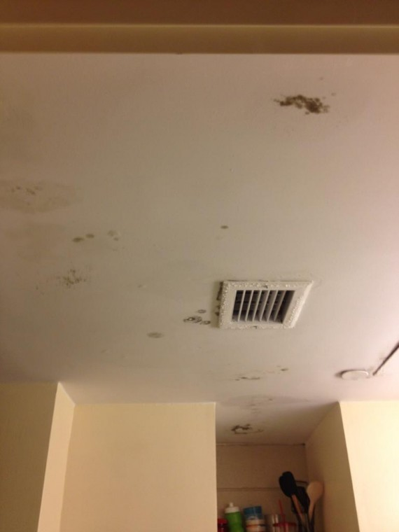 mold in Tampa dorm rooms