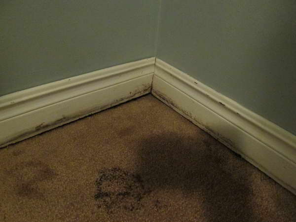 Mold Remediation in Carpeting Tampa FL